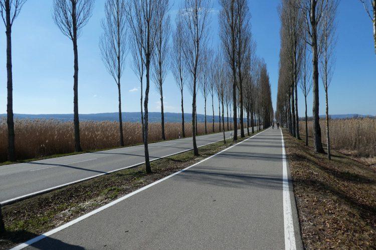 Insel Reichenau, Allee