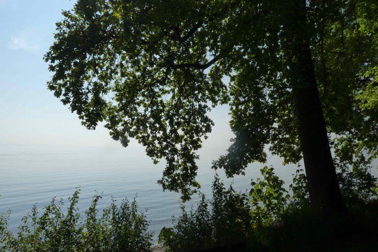Aussicht vom Hörlepark auf den Bodensee